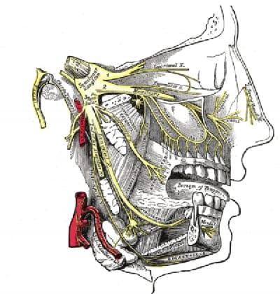 Pain Management of Trigeminal Neuralgia in Lakeland, Florida