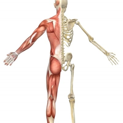 Pain Management of Musculoskeletal Pain in Lakeland, Florida